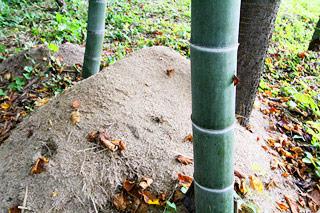 チップは腐葉土となり、環境にも優しいです。