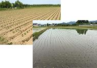 オーガニックな野菜作りや稲作に適した土壌改良材となります。