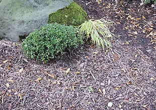 粉砕したチップは、敷材として雑草押さえに再活用