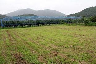 7ヘクタールもの敷地からは、大量の余分な枝木が出ます