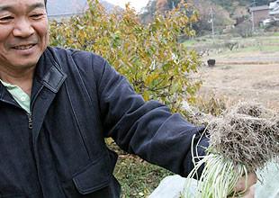 発酵竹粉で育てた水菜の根っこ。