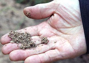 畑に混ぜ込んだ発酵竹粉。