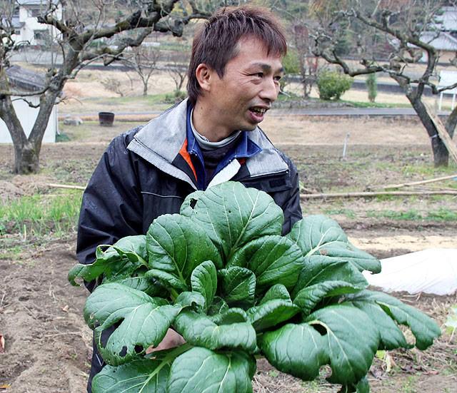 「こんな大きな小松菜は見たことありません。」