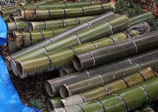 直径12センチの大ぶりの竹。