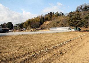 田村氏の竹林。200坪ある。