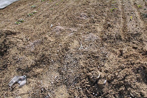 「栄養のバランスが良く、土が良ければヒゲのような根っこは出ません。