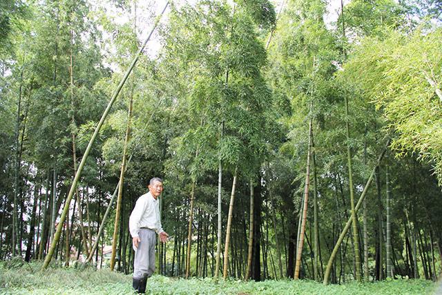 竹林を持っている方にお勧めです