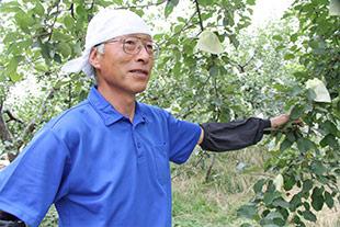 リンゴの木と阿部さん
