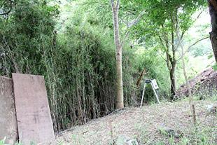 現在は竹を粉砕しているそうです